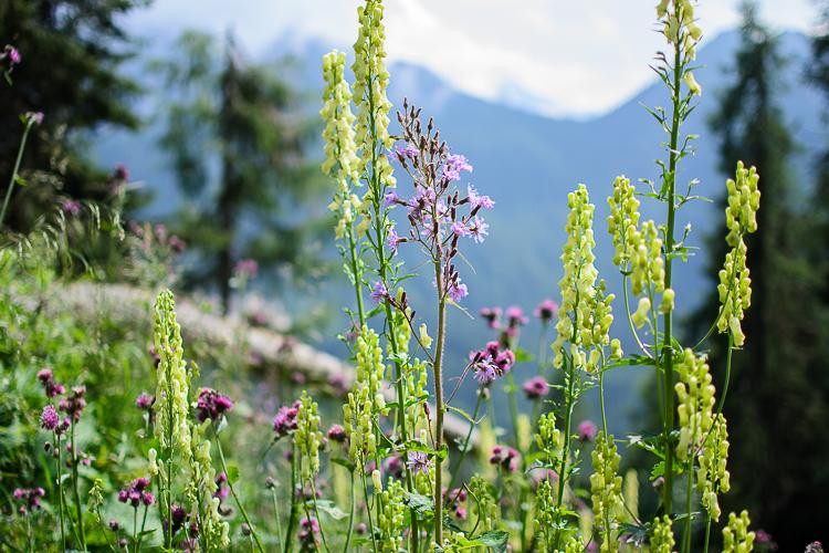 Dolomites-Rifugio-Monte-Rite-August-12-13-2014-15
