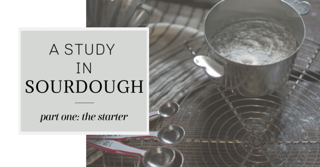 A Study in Sourdough: Part One- The Starter | Kitchen Joy